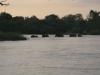 olifanten-zwemmen