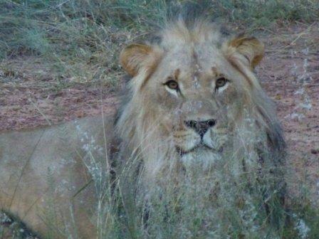 De koning der dieren