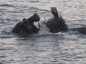 De Zambezi bij zonsondergang vanaf een cruiseboot