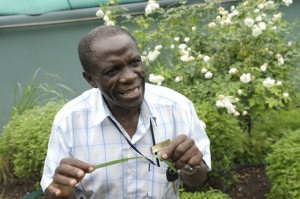 Kruiden tegen ziekten  als malaria