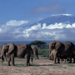 Largest elephant census on its way