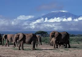 Kenia, olifanten Mount Kenya