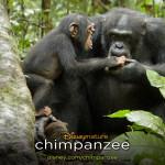 'Hoofdrolspelers' in de film Chimpanzee, Oscar en Freddy